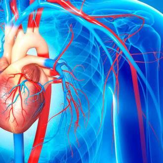 23.артерии