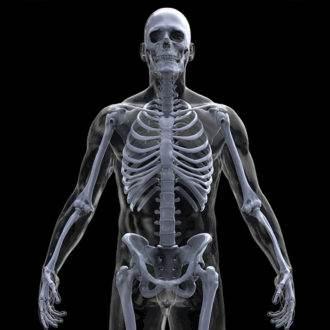 38.кости