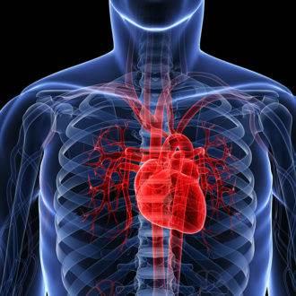 4.Сердце